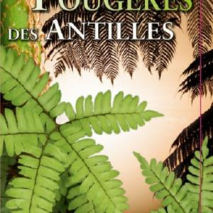 Fougères et plantes alliées des Petites Antilles
